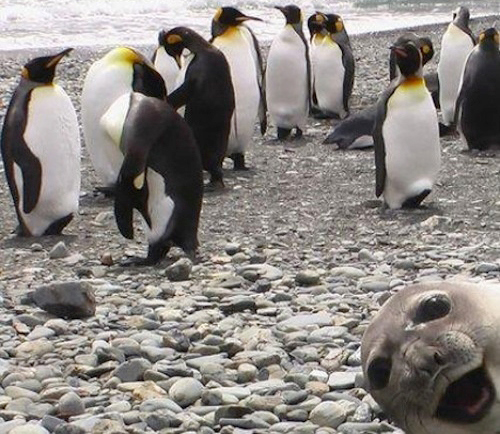 seal-photobomb